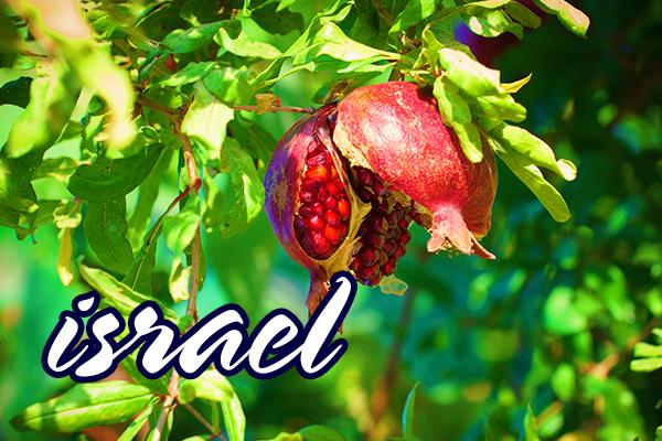 ISRAEL - CIRCUIT DE SF ANDREI